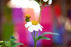 Wilde bloem op kleurrijke achtergrond Stock Afbeeldingen