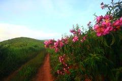 Wilde bloem in tropische botanisch op de Berg stock foto's