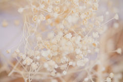 Wilde bloem uitstekende die filter voor textuurachtergrond wordt geconcentreerd stock afbeeldingen