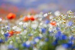 Wilde bloemen Royalty-vrije Stock Fotografie