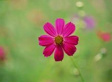 Wilde Bloemen Royalty-vrije Stock Afbeeldingen