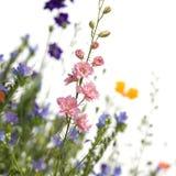 Wilde bloemen Royalty-vrije Stock Foto