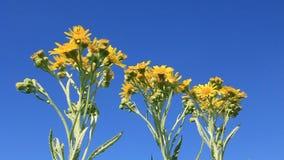 Wilde bloemen stock videobeelden