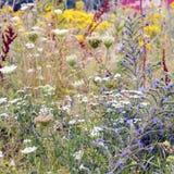 Wilde bloemen Stock Afbeeldingen