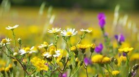 Wilde bloemen. stock afbeeldingen