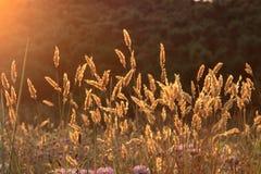 Wilde bloemen bij zonsondergang Stock Foto's