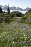 Wilde Bloemen Cascades/Mt regenachtiger Stock Afbeelding