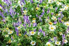 Wilde bloemen in de weide stock foto's
