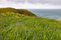 Wilde bloemen die bij de rand van de klip groeien Stock Foto