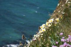 Wilde bloemen die op de klip over de oceaan bloeien Stock Afbeeldingen
