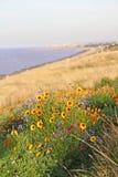 Wilde bloemen door kustlijn royalty-vrije stock afbeeldingen