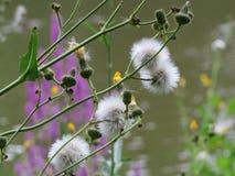 Wilde bloemen in eastham counrty park Stock Afbeeldingen