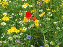 Wilde bloemen in een de zomerweide in Engeland stock fotografie