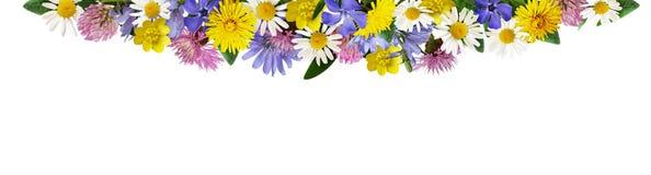 Wilde bloemen in een grensregeling Royalty-vrije Stock Foto's