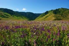 Wilde bloemen en bossen Stock Foto