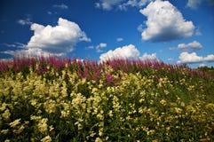 Wilde bloemen en een gedeeltelijk bewolkte hemel Royalty-vrije Stock Afbeeldingen