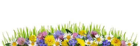 Wilde bloemen en groen gras in een grensregeling Stock Foto