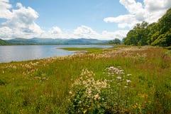 Wilde bloemen en het meer Stock Foto