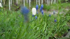 Wilde bloemen en installaties Wilde Bloemen Kleurrijke bloemen op het gebied Wildflowers onder gras en de wilde bloemen sluiten o stock footage