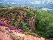 Wilde bloemen en klip Royalty-vrije Stock Foto's