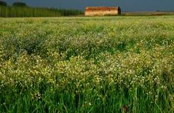 Wilde bloemen en oude Schuur Royalty-vrije Stock Fotografie