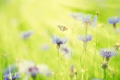 Wilde bloemen en vlinder die in het zonlicht vliegen Royalty-vrije Stock Afbeeldingen