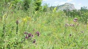 Wilde bloemen en weide stock footage