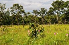 Wilde Bloemen in het bos in de provincie van Preah Vihear, Kambodja stock fotografie