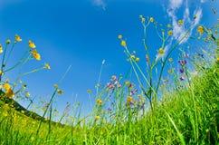 Wilde bloemen in het gras Stock Foto's