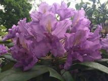 Wilde bloemen in het hout stock foto's