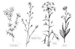 Wilde bloemen met etiketten Stock Afbeeldingen