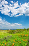 Wilde bloemen naast overzees onder dramatische hemelen Stock Foto