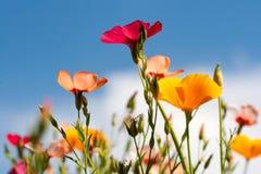 Wilde bloemen onder een blauwe hemel Royalty-vrije Stock Fotografie