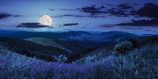 Wilde bloemen op de bergbovenkant bij nacht Stock Afbeelding