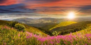 Wilde bloemen op de bergbovenkant bij zonsondergang Stock Afbeelding