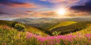Wilde bloemen op de bergbovenkant bij zonsondergang Royalty-vrije Stock Foto