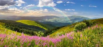 Wilde bloemen op de bergbovenkant bij zonsopgang Stock Foto