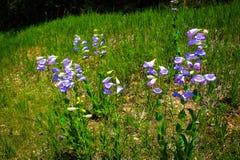Wilde bloemen op de kant van de weg Stock Afbeeldingen