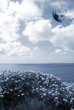 Wilde bloemen op de klippenrand met een volle maan Stock Afbeelding