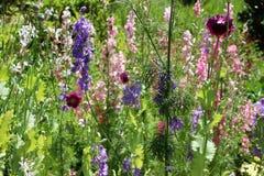 Wilde bloemen op de weg Stock Afbeelding