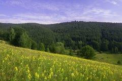 Wilde bloemen op een bergweiland Royalty-vrije Stock Fotografie