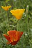 Wilde bloemen op een de zomerweide Stock Afbeelding