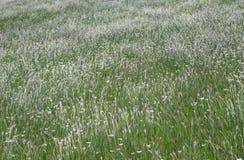 Wilde bloemen op een gebied Royalty-vrije Stock Foto
