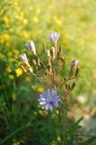 wilde bloemen op een weide achtergrondfoto Royalty-vrije Stock Foto