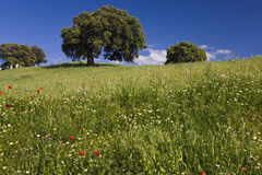 Wilde bloemen op gebied, Spanje royalty-vrije stock foto