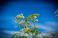 Wilde bloemen op het gebied Royalty-vrije Stock Afbeeldingen