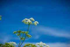 Wilde bloemen op het gebied Stock Afbeeldingen
