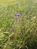 Wilde Bloemen op heuvel stock afbeelding