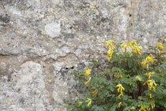 Wilde bloemen op oude steenmuur Stock Afbeelding