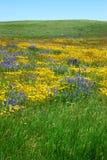 Wilde bloemen op prairie Stock Fotografie